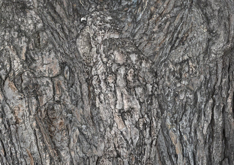 Composite photograph of pine tree bark forming images- here a bird of prey dominates