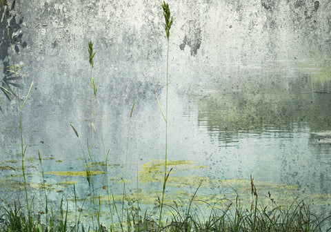 Reeds, pond weed, water reflection and wall textures composite  in blue and grey and green hues.