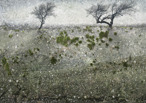 Composite of moss covered textural wall and two silhouetted trees, creating a new landscape photograph