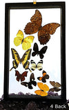 Butterflies Peruvian 10 Framed Specimens Back View - New Earth Gifts