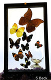 Butterflies 10 Framed Specimens Back View - New Earth Gifts
