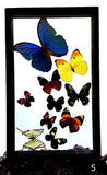 Butterflies 10 Framed Specimens - New Earth Gifts