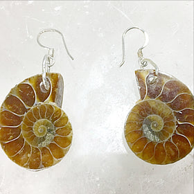 Ammonite Sterling Silver Earrings - New Earth Gifts