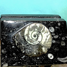 Ammonite Fossil Letter Holder - New Earth Gifts