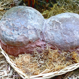 Dinosaur Eggs - Dendroolithus Egg Pair - New Earth Gifts