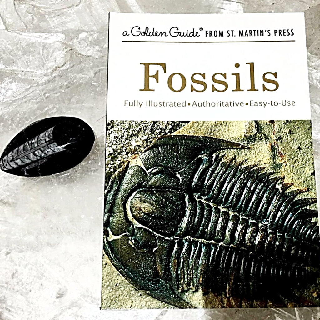 fossils book the golden guide series new earth gifts rh newearthgifts com Insects Golden Guide The Golden Guide for Seniors