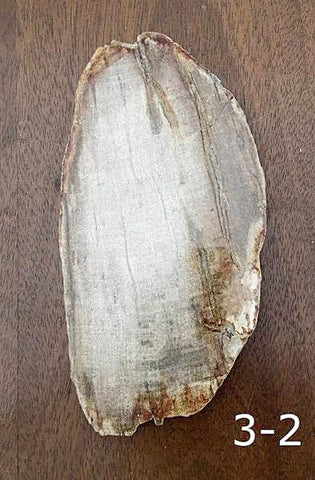 Large Polished Petrified Wood Slab For Sale New Earth Gifts