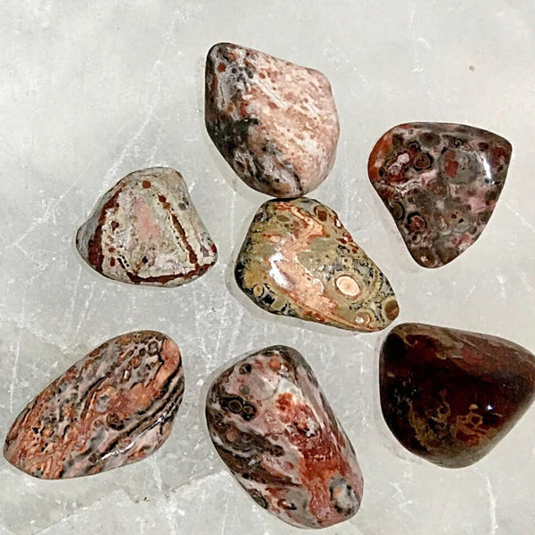 Leopardskin Jasper Polish Tumbled Stone 1 pc | New Earth Gifts