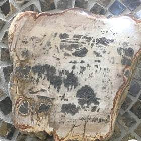 Polished Petrified Wood Slab From Indonesia For Sale New Earth Gifts