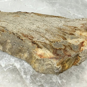 Large Petrified Wood Slab - Polished For Sale New Earth Gifts