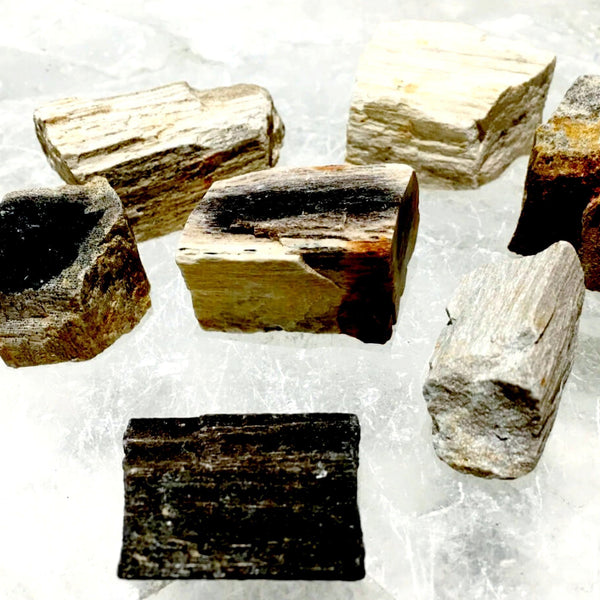 Petrified Wood - 1 pc Fossilized Stone | New Earth Gifts
