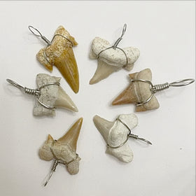 Mini Shark Teeth Pendants - new earth gifts