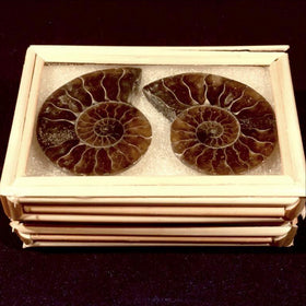 Ammonite Box Framed Split - New Earth Gifts