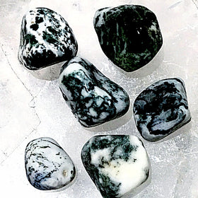 Tree Agate Tumbled Stone 1 pc - New Earth Gifts