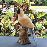Gemstone Parrot in Yellow Calcite - New Earth Gifts