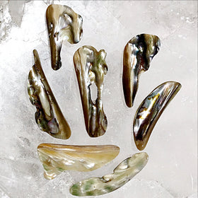 Abalone Slices - New Earth Gifts and Beads