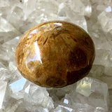 Sea Urchin Polished Fossil - New Earth Gifts and Beads
