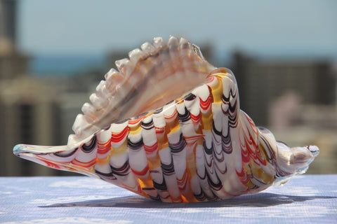 Sea Conch in Red, White and Black