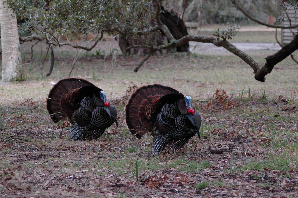 Top Tips for Spring Turkey Hunting