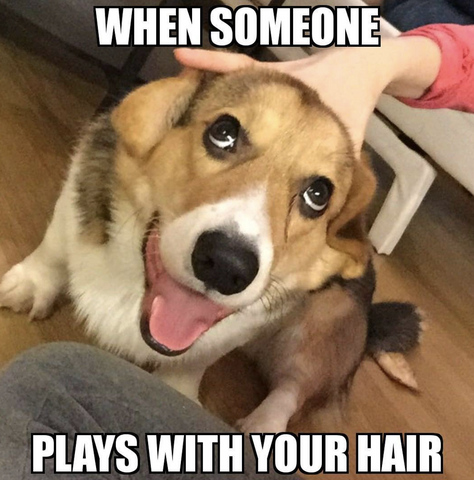 when someone plays with your hair meme