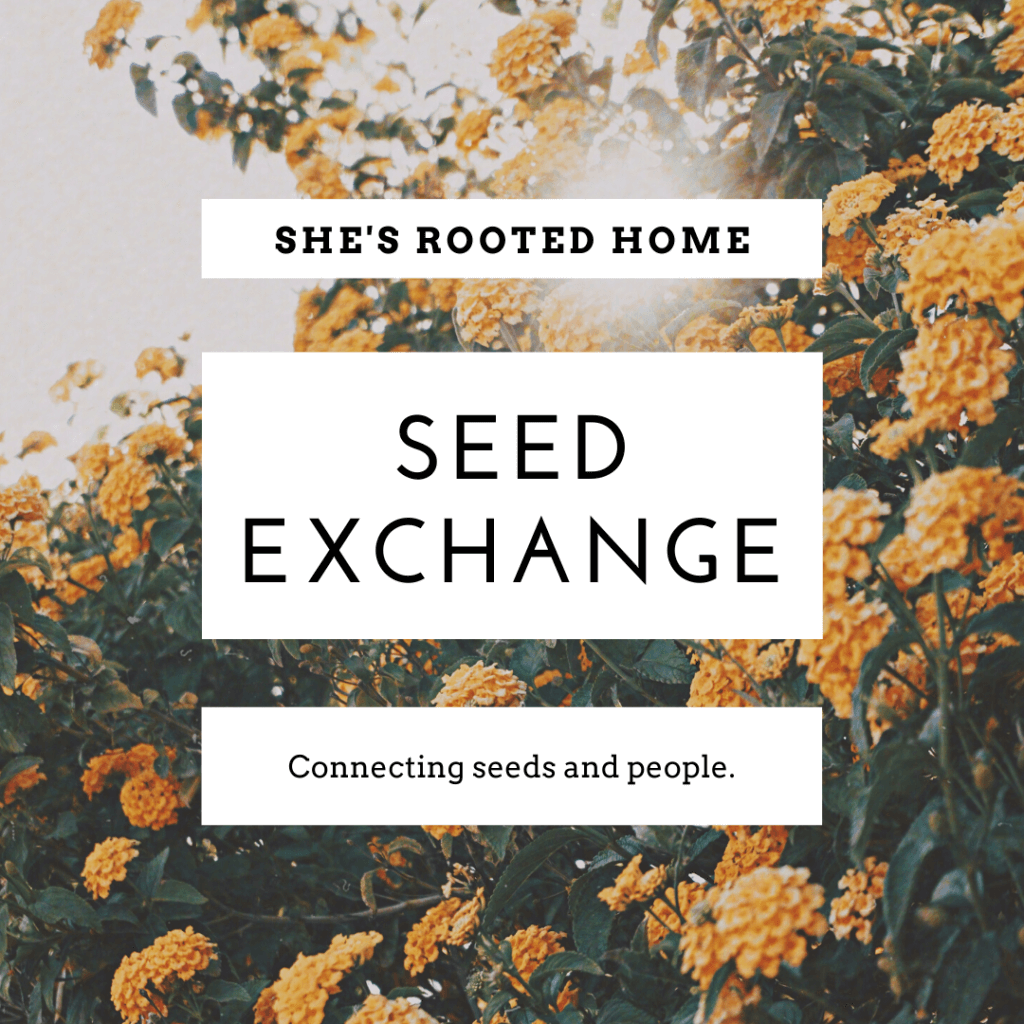 Fall Seed Exchange from She's Rooted Home
