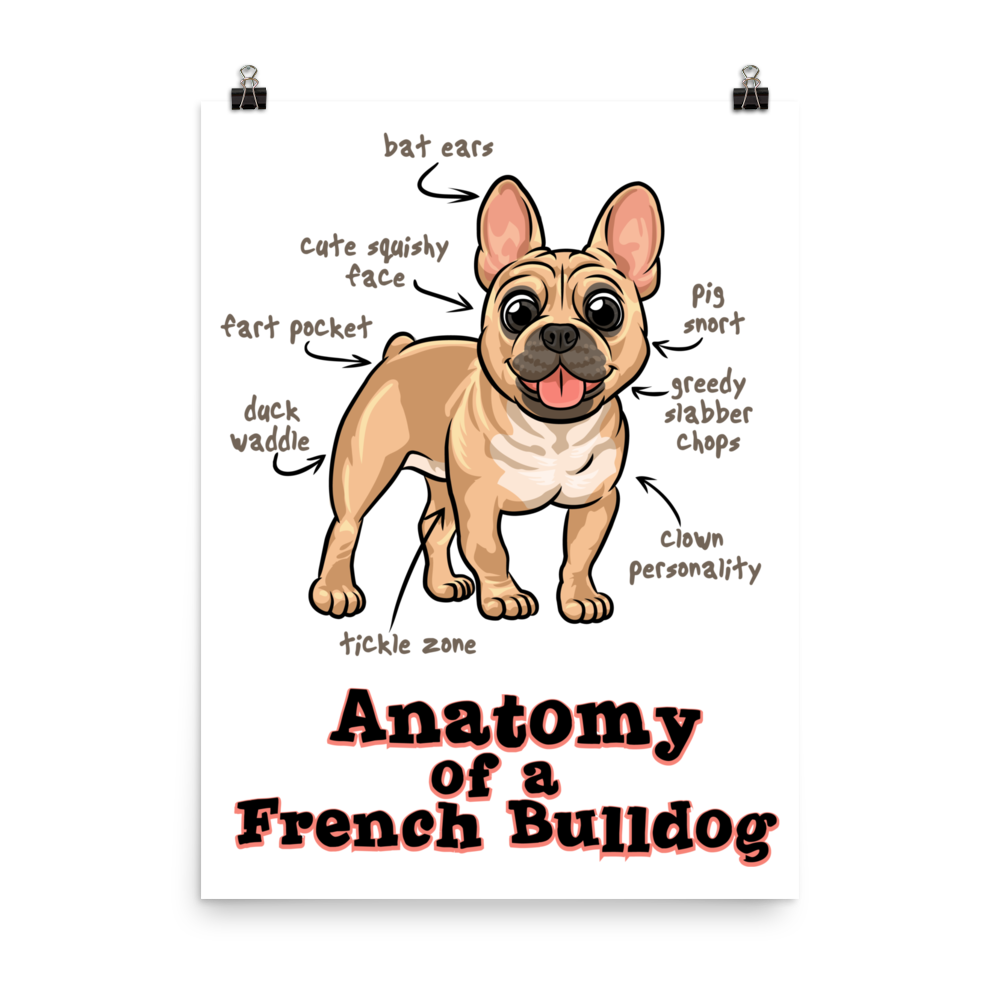 Anatomy of a French Bulldog - Photo paper poster – Dogaholics Anonymous