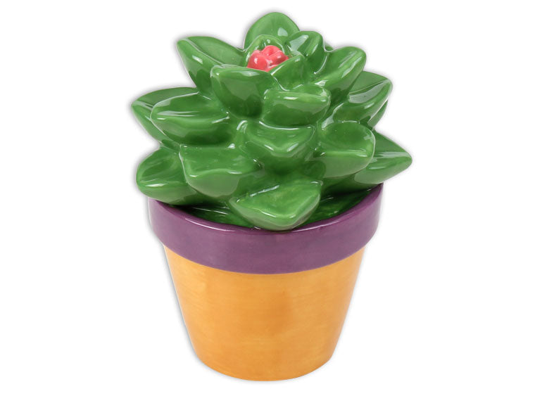 Succulent Pottery To Go