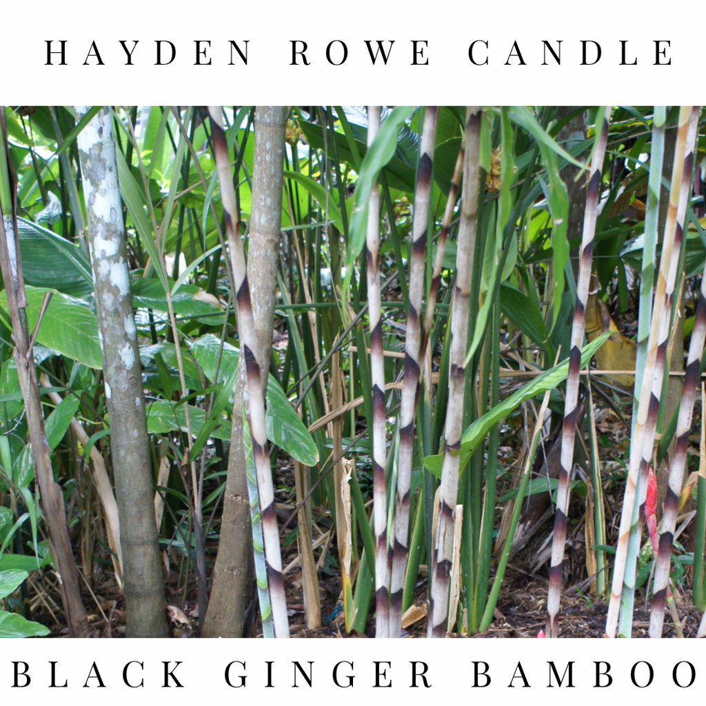 Black Ginger Bamboo Scented Wax