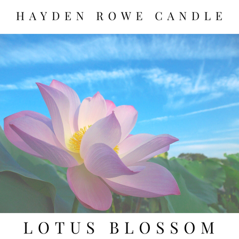 Lotus Blossom Scented Wax