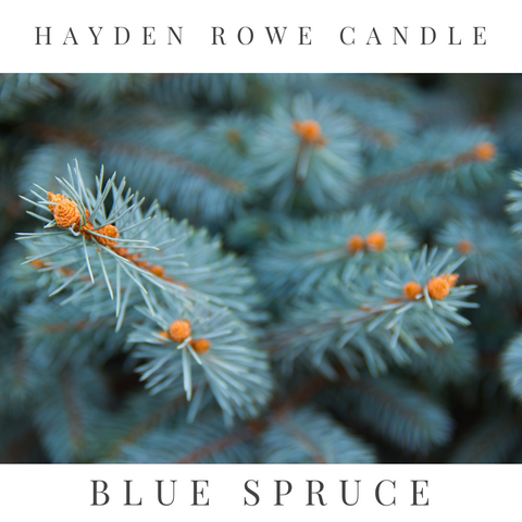 Blue Spruce Scented Wax