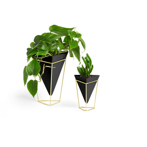 Trigg Tabletop Vessel, Set of 2 - Black Brass