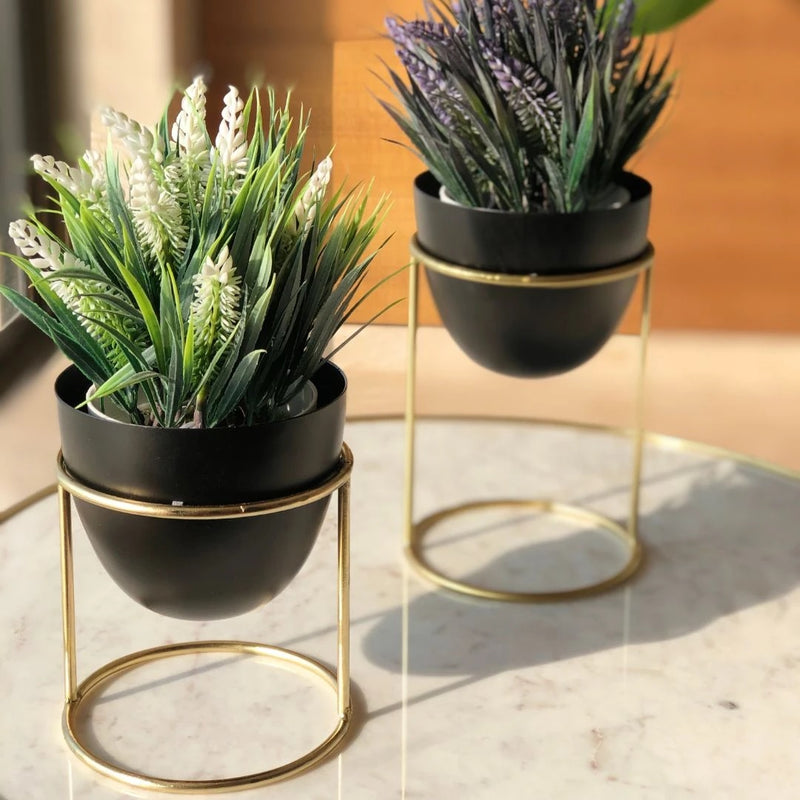 Olvera Small Desk Planters, Set of 2 - Black
