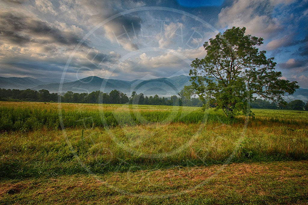 Cades Cove Summer Tree