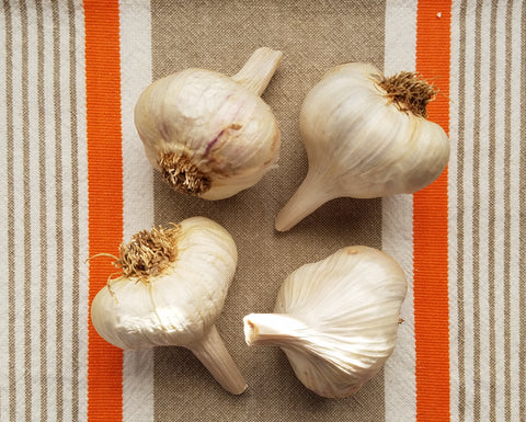 Siskiyou Purple Organic Seed Garlic