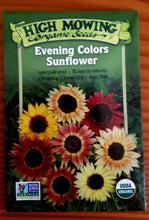 Load image into Gallery viewer, Evening Colors Sunflowers