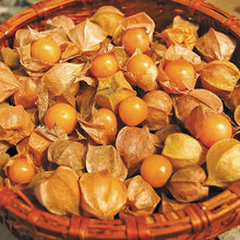 Load image into Gallery viewer, Ground Cherry - Goldie