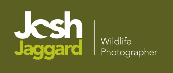 Josh Jaggard Wildlife Photography