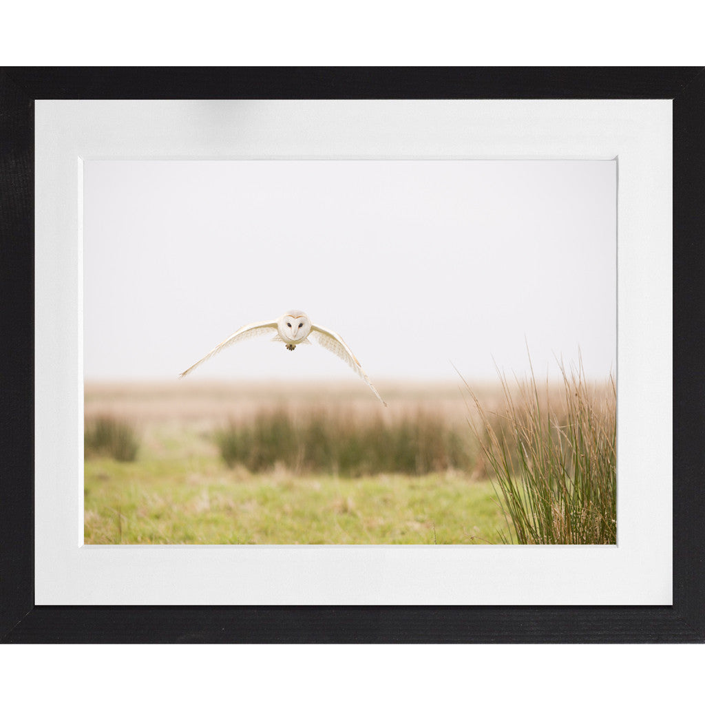 Barn Owl Flying - A3 Framed