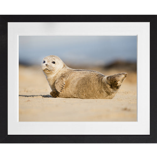 Common Seal - A3 Framed