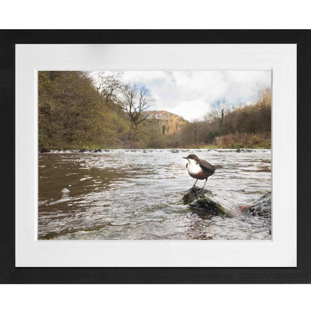 Dipper in the peaks - A4 Prints