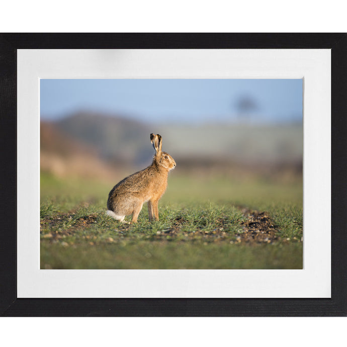 Hare Portrait - A3 Framed