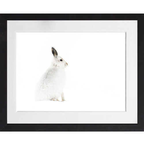 Mountain hare in snow - A3 Framed