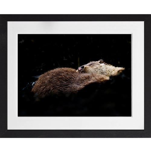 Three otters sleeping - A3 Framed