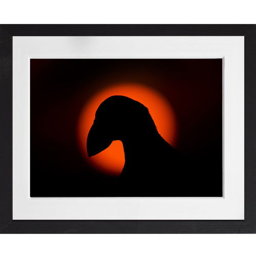 Puffin Silhouette - A3 Framed