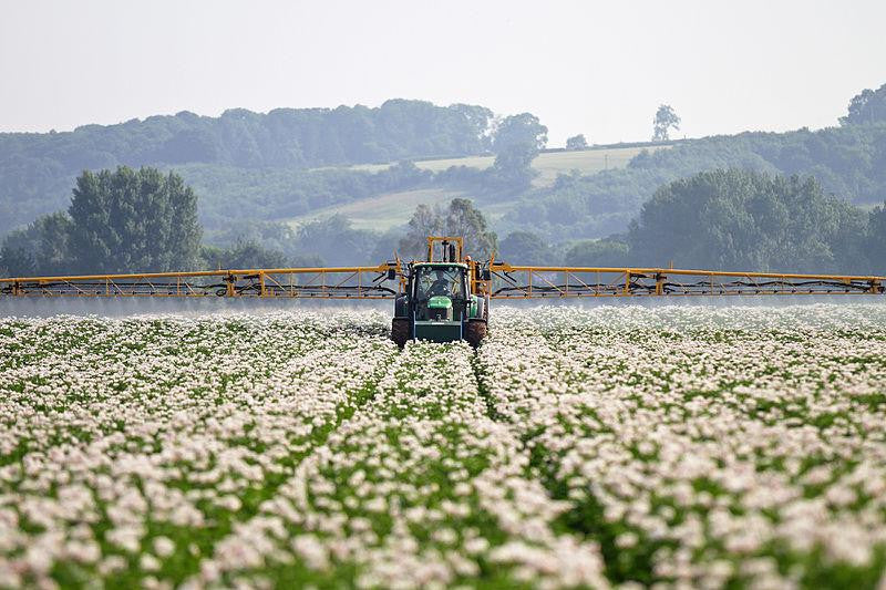 spraying of cotton fields with pesticides and insecticides, chemicals. time for change
