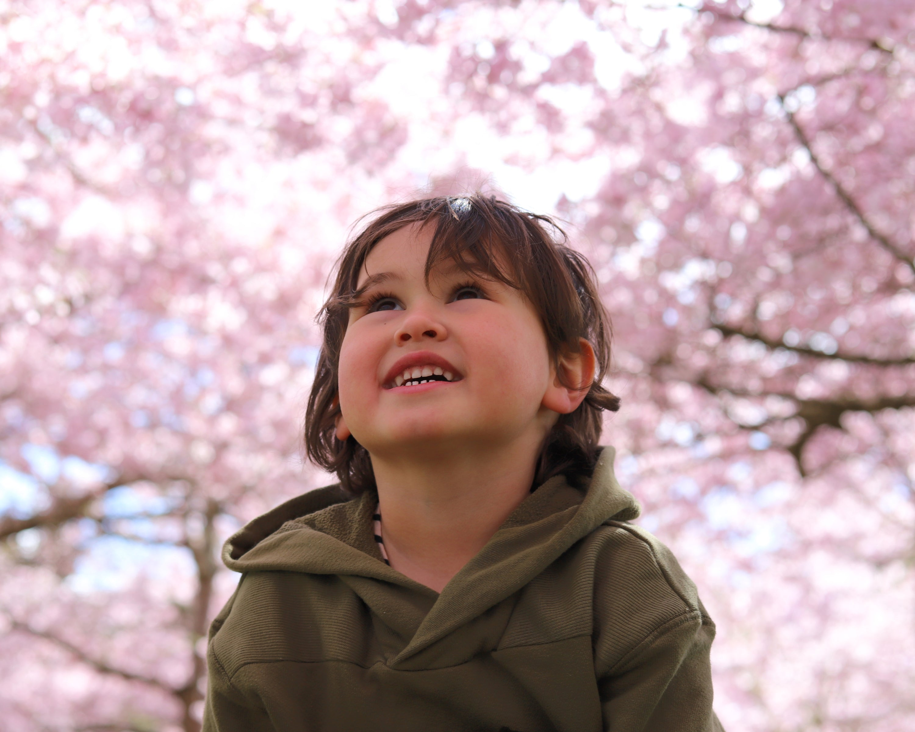 Chase and the Cherry Blossoms. Waikato, New Zealand