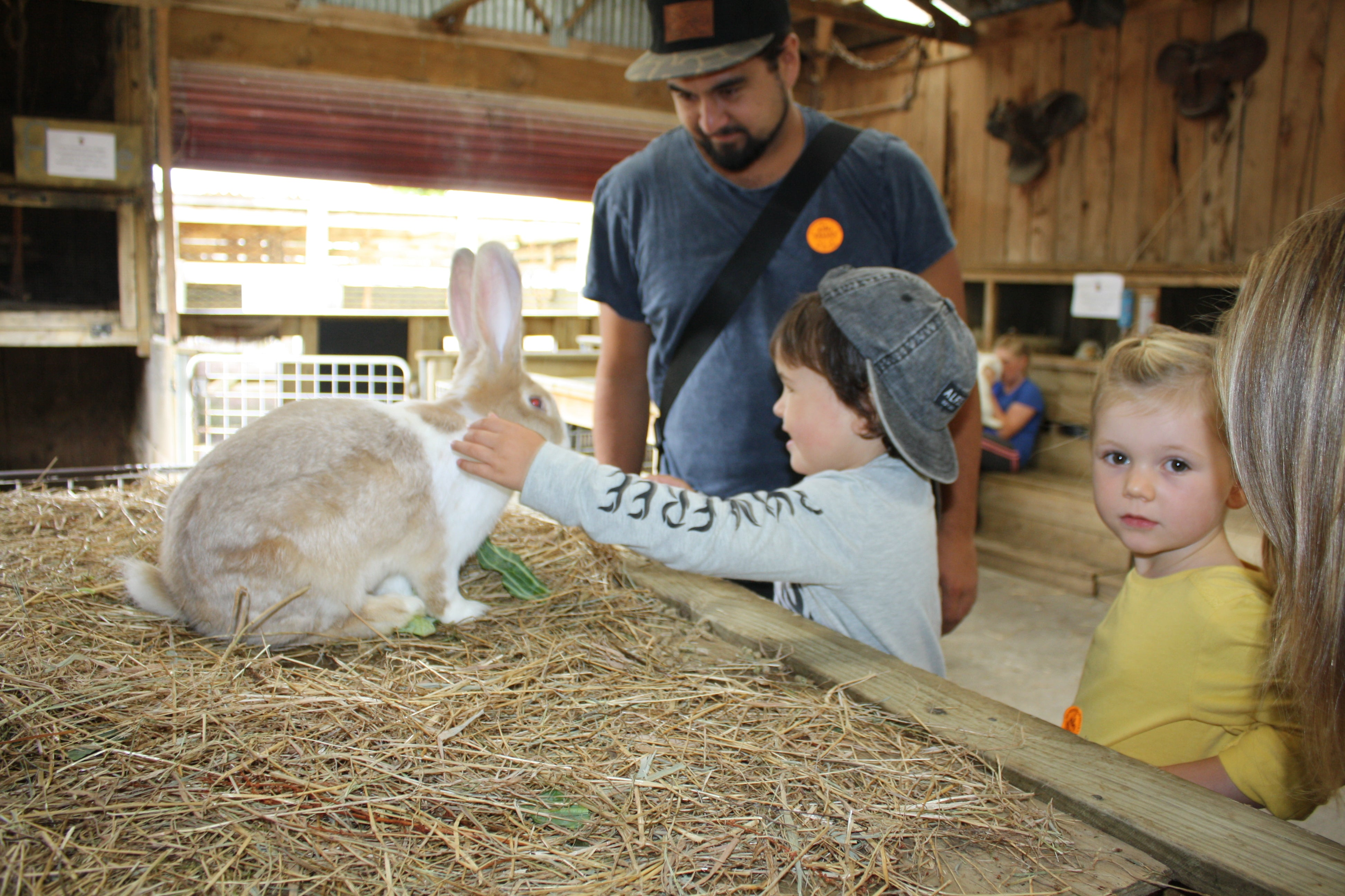 Farm Petting Area, Kiwi Valley Farm, Things to do with Kids in Auckland, Pop Factory, Wilechile Boutique