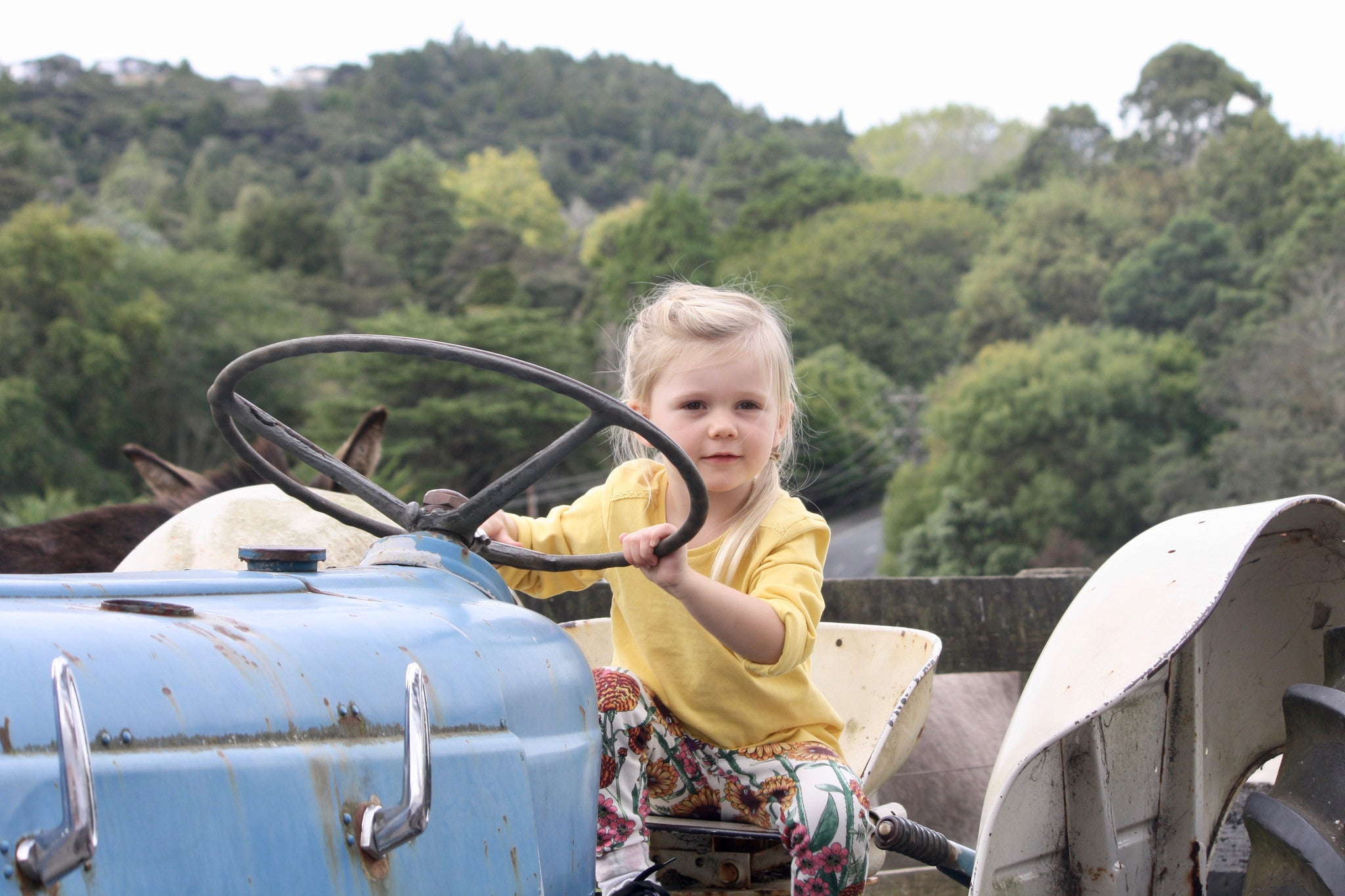 Kids Riding old school tractors at Kiwi Valley Farm, Wilechile Boutique
