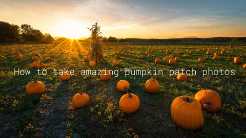 how to take amazing photos at the pumpkin patch
