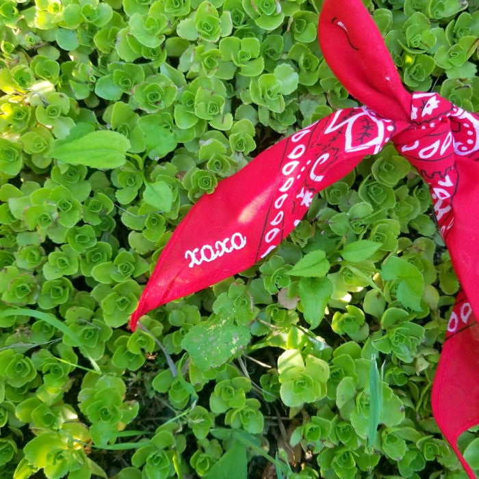 XOXO EMBROIDERED RED BANDANA